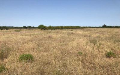 Première plantation en occitanie